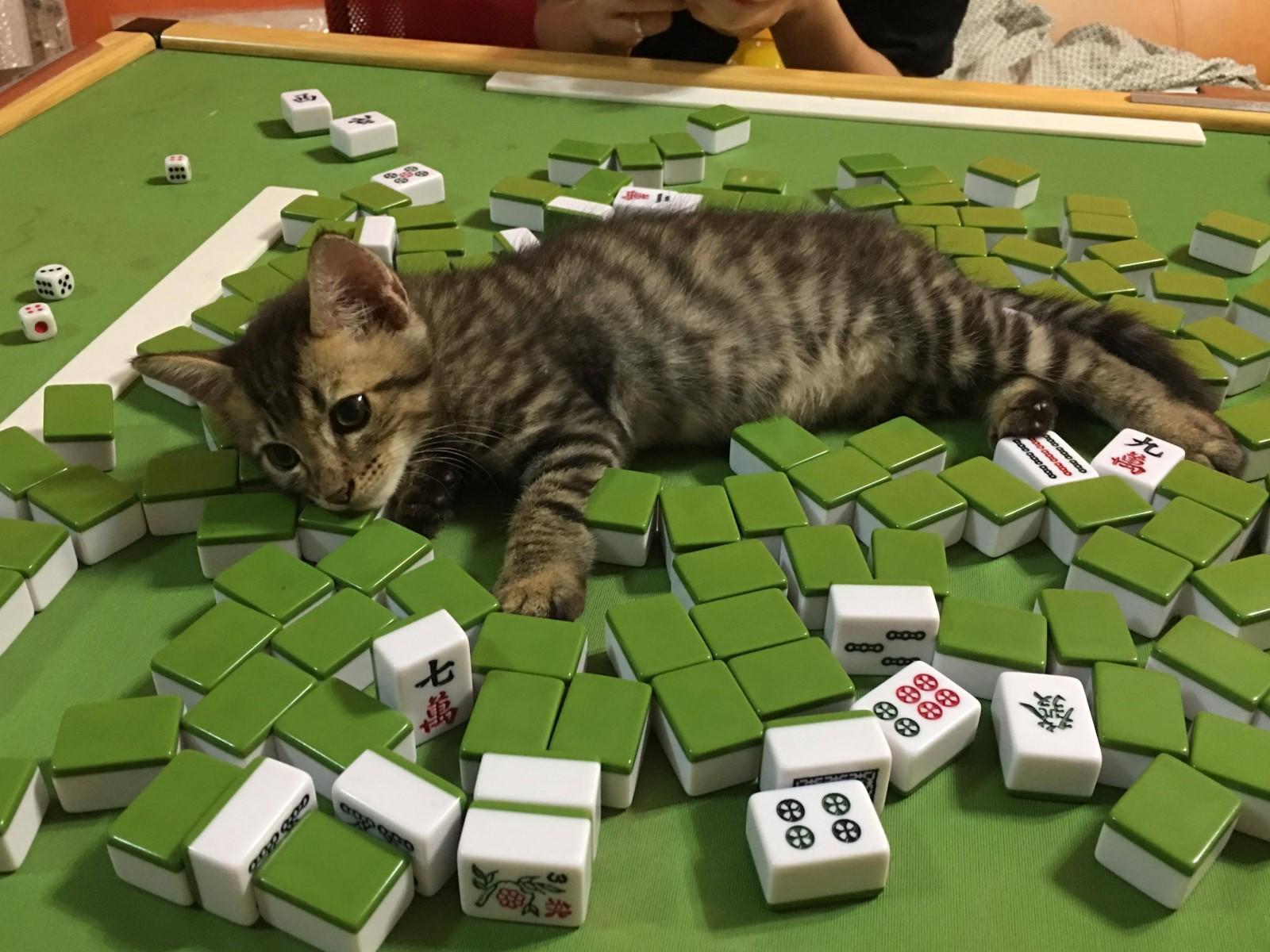 【線上麻將現金版3秒湊桌】線上麻將遊戲推薦BCR娛樂城